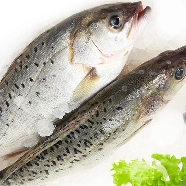 浪里鲜 野生海捕新鲜海鲈鱼 750g